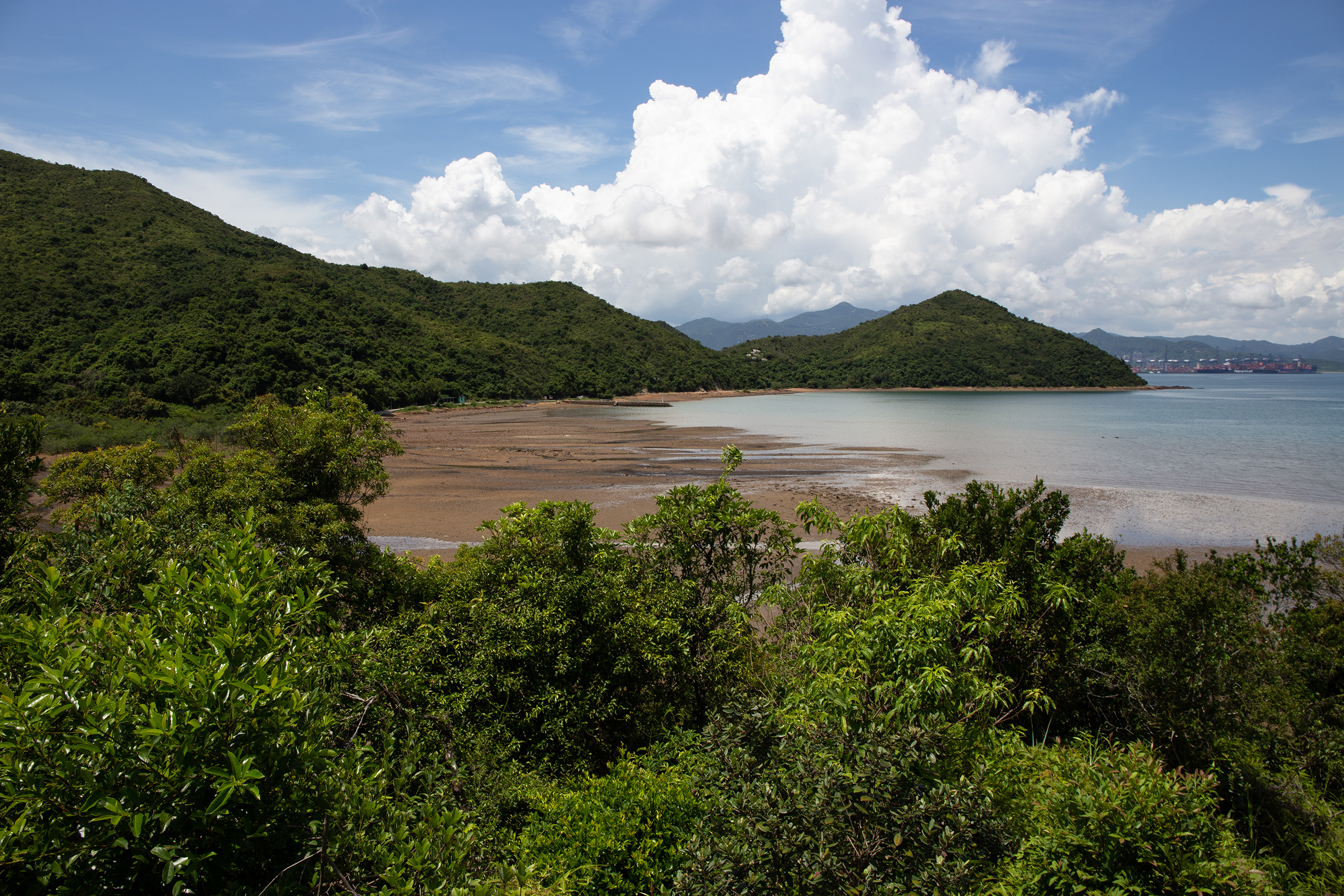 "Directly north of Three Fathoms Cove at Lai Chi Wo, a remote part of the Plover Cove Country Park, a patch of unprotected mangroves thrives in mudflats, seen here exposed at low tide. Hong Kong University researcher Brian Morton has described this patch as ""the most intact mangrove in all of China"", recommending it be protected as a World Heritage Site. (Image: Katherine Cheng / China Dialogue)"