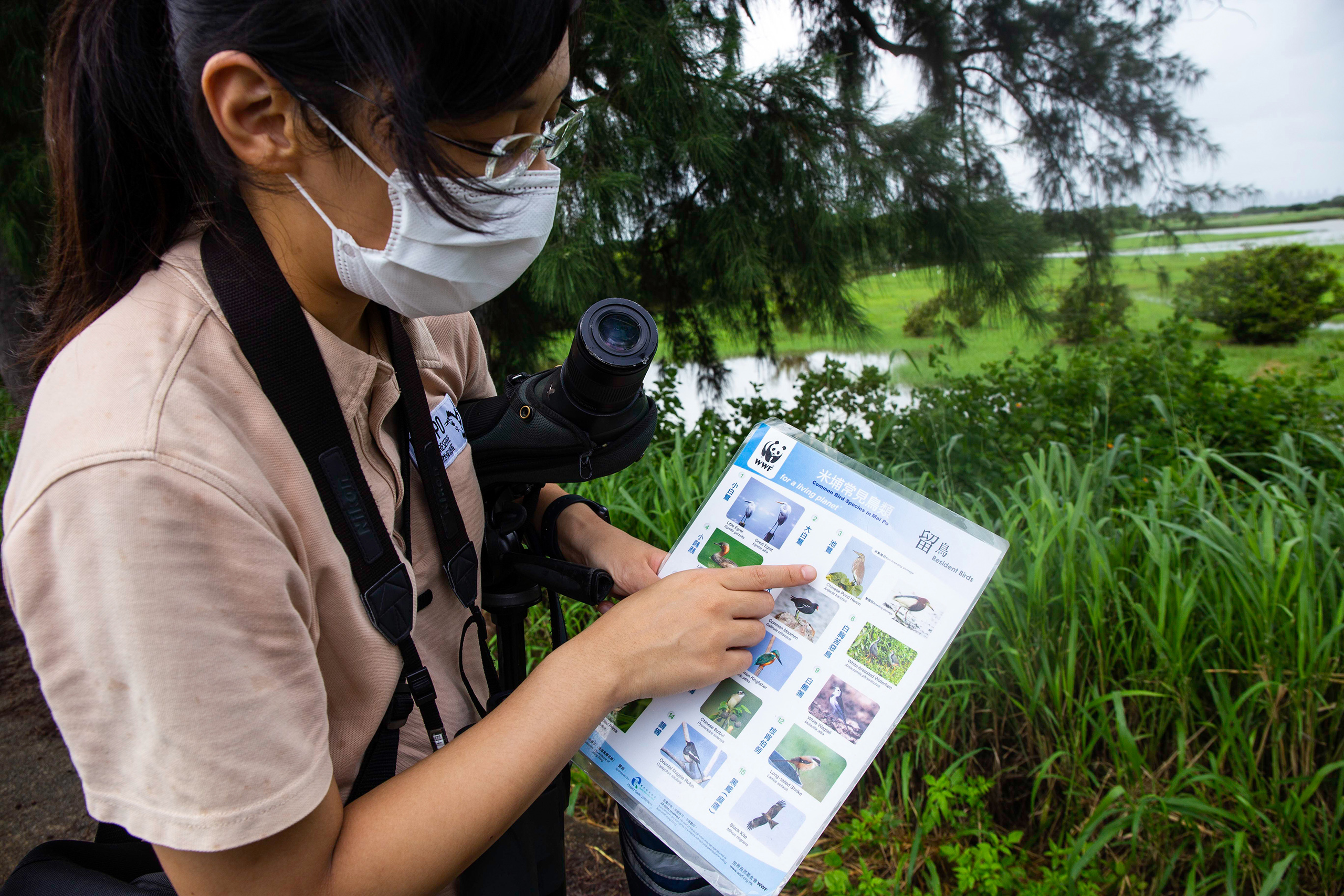WWF staff member Cindy Chau identifies a bird spotted in the distance on the Mai Po reserve, home to Hong Kong's largest remaining patch of mangroves. This expanse of marshes and mudflats at the head of Deep Bay supports a wide variety of birds, as well as other animals. The winter months are especially busy – an estimated 60,000 migratory birds spend the season here. (Image: Katherine Cheng / China Dialogue)
