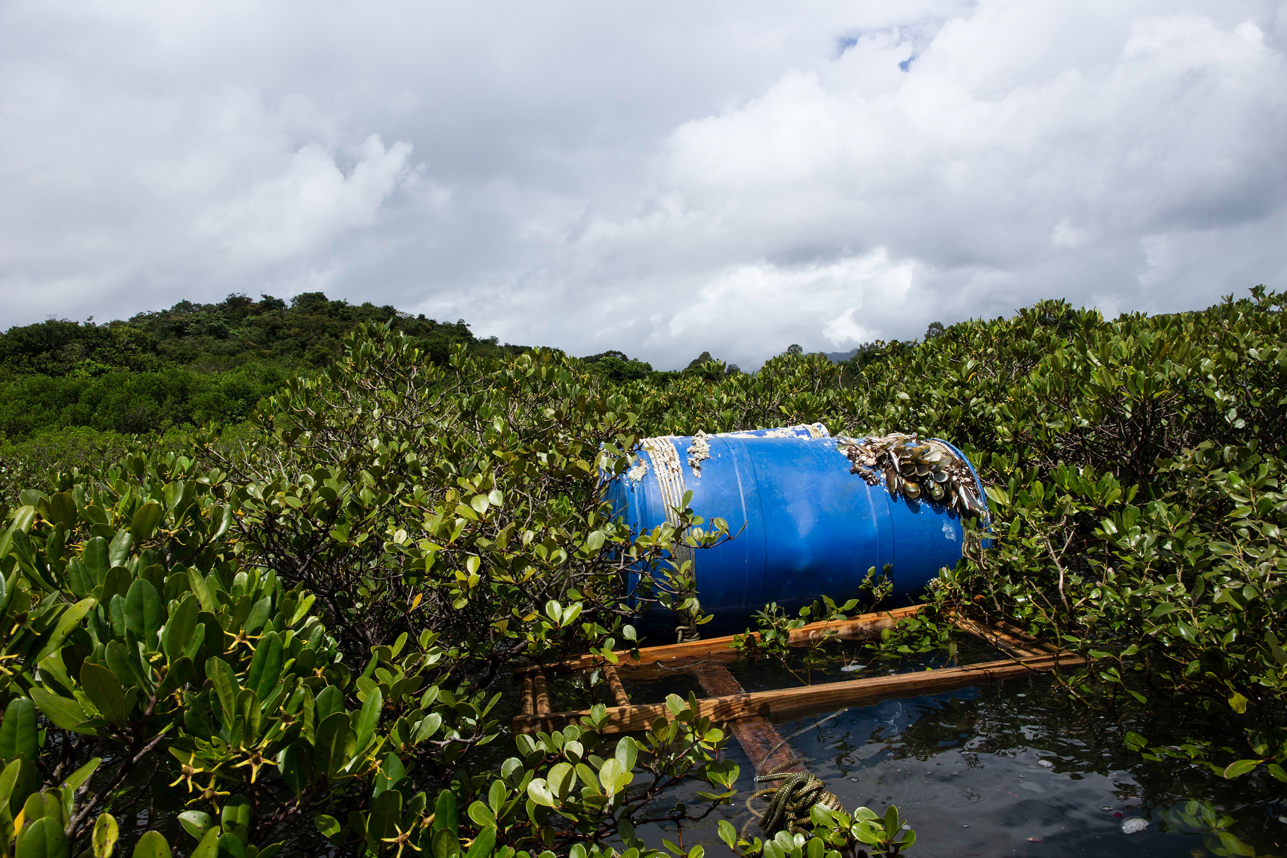 A barrel float used by local fishers is caught in a tangle of mangrove branches in Three Fathoms Cove on the eastern side of the Hong Kong SAR. Protected as a site of special scientific interest, the mangroves here remain vulnerable to overfishing and pollution from aquaculture due to limited capacity for monitoring and enforcement. (Image: Katherine Cheng / China Dialogue)